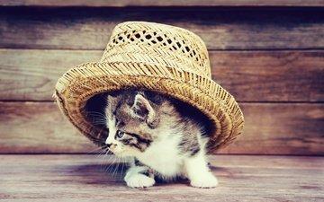 кот, мордочка, усы, кошка, взгляд, котенок, шляпа