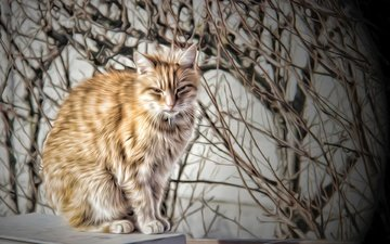 figure, background, cat, muzzle, mustache, branches, look