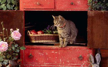 flowers, cat, muzzle, mustache, apples, look, wardrobe