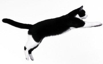 кот, мордочка, усы, кошка, взгляд, прыжок