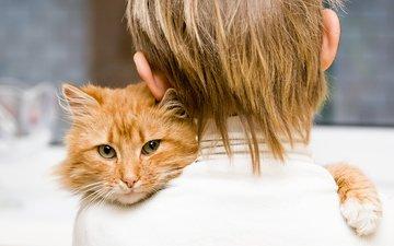 кот, мордочка, усы, кошка, взгляд, дети, мальчик, рыжий, друзья, объятия