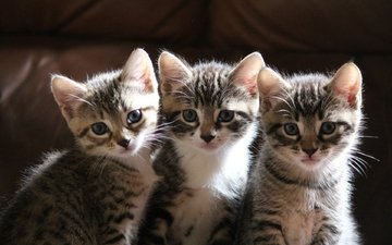 мордочка, усы, взгляд, коты, кошки, котята