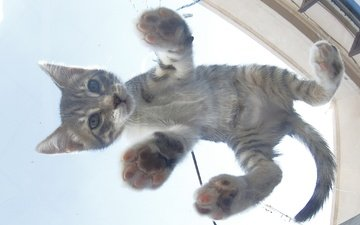 кот, мордочка, усы, кошка, взгляд, котенок, малыш, вид снизу
