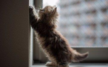 кот, мордочка, усы, кошка, взгляд, котенок, малыш
