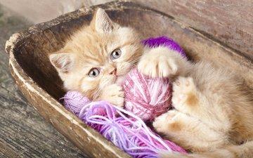 кот, мордочка, усы, кошка, взгляд, котенок, животное, клубки, детеныш, нитки
