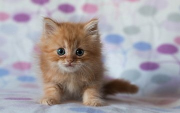 кот, мордочка, усы, кошка, взгляд, котенок, рыжий кот