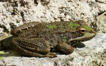 nature, frog, toad, amphibians
