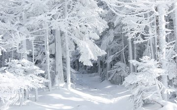 road, snow, nature, forest, winter, frost, thicket
