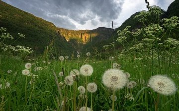 the sky, flowers, grass, clouds, hills, summer, dandelions, norway