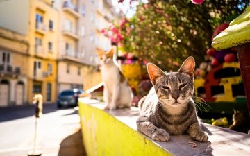 summer, the city, street, cats, heat