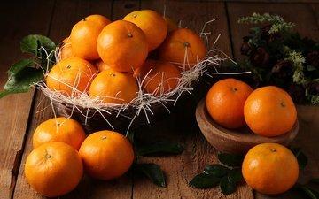 листья, фрукты, мандарины, цитрусы