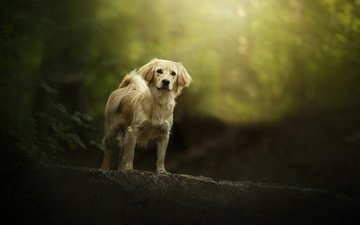 nature, leaves, look, dog, mongrel, bokeh
