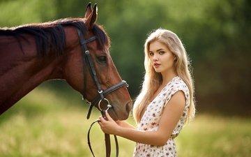 лошадь, девушка