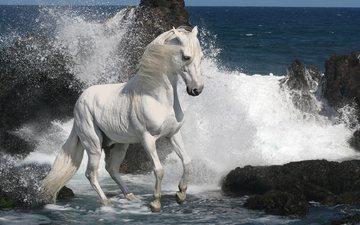 лошадь, скалы, камни, море, прибой, конь, жеребец, скакун