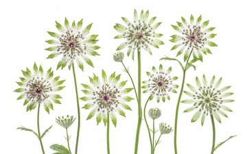 macro, herbarium