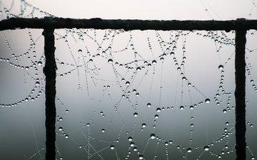 macro, drops, web