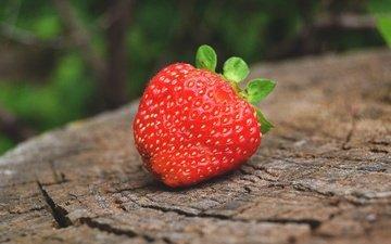 макро, лето, ягода, клубника, пень