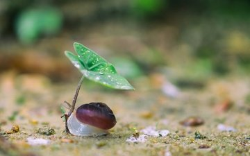 nature, macro, background, drops, sheet, snail