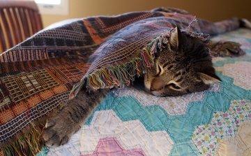 морда, кот, кошка, отдых, кровать, одеяло, лапа