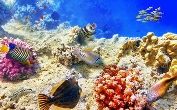 море, рыбы, дно, кораллы, подводный мир