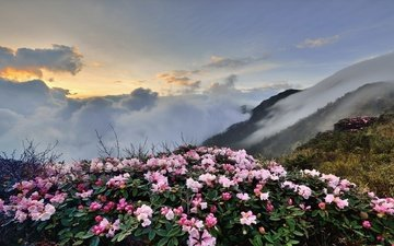 the sky, flowers, clouds, mountains