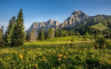 the sky, flowers, grass, trees, mountains, rocks, the sun, greens, austria, meadow, alps