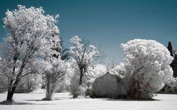 небо, деревья, снег, зима, иней, инфракрасный снимок