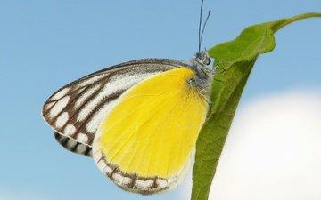 небо, макро, бабочка