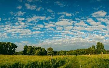 небо, дорога, трава, облака, деревья, зелень, поля, поле, забор
