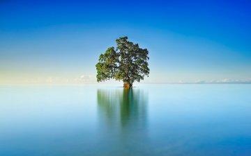 небо, озеро, дерево, отражение, пейзаж, горизонт, гладь