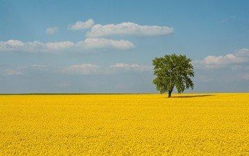 небо, цветы, облака, солнце, дерево, пейзаж, поле, горизонт, рапс