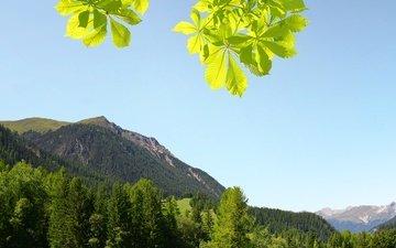 небо, трава, деревья, горы, солнце, зелень, лес, ветки, кусты, листва, склон, швейцария, альпы