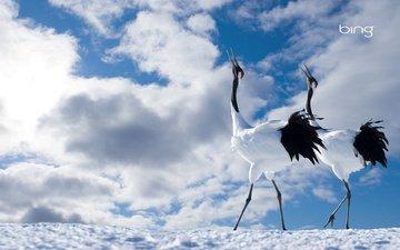 небо, облака, птицы, пара, журавли, японский журавль