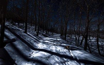 ночь, деревья, снег, лес, зима, лиса, следы, лисица
