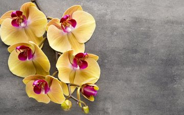 flowers, branch, background, orchids, tropical flowers