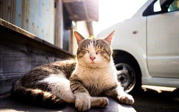кот, мордочка, усы, кошка, улица, отдых