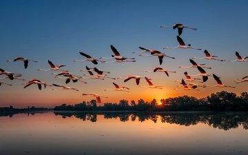 озеро, природа, закат, фламинго, птицы, стая, перелет