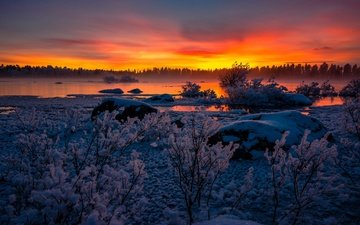 lake, snow, sunset, winter, the bushes, frost, sweden, lapland, lappland, arjeplog, lake hornavan