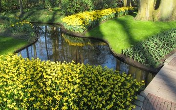 flowers, park, pond, daffodils, netherlands, holland, keukenhof