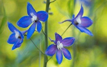 природа, цветок, лепестки, растение, стебель, водосбор