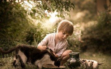 природа, кошка, котенок, мальчик, кувшин, друзья, кормление