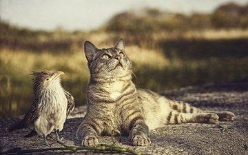 природа, кот, кошка, птица, любопытство, птичка