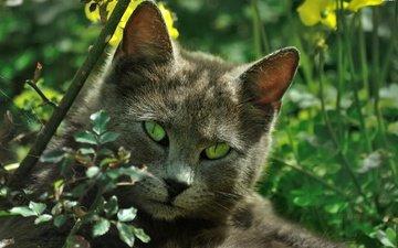 природа, кот, листва, кошка, зеленые глаза