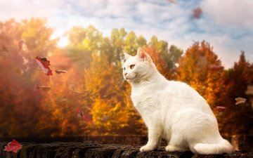 nature, leaves, cat, muzzle, mustache, look, autumn, animal, the wind