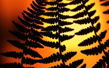 nature, leaves, silhouette, plant, fern