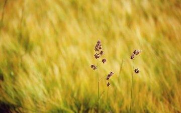 трава, природа, макро, поле, размытость, полевые цветы