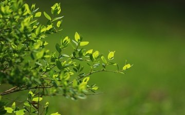 nature, greens, leaves, blur, twigs