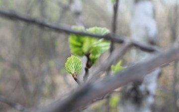 природа, листья, зелёный, ветки, лист, размытость, весна, етки