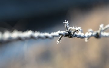 wire, frost, the fence, blur, barbed wire