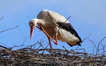 небо, птица, клюв, перья, аист, гнездо, белый аист